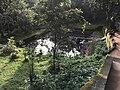 Thirunelli Maha Vishnu temple water tank view.jpg