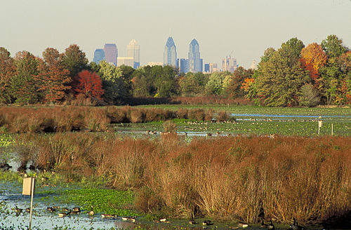 Thumbnail from John Heinz National Wildlife Refuge at Tinicum