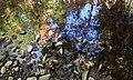 Tischer Creek Reflections, Duluth (9881062806).jpg