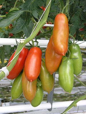 San Marzano fruit