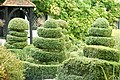 Topiary at The Old Cottage, West Horsley, Surrey - geograph.org.uk - 1496924.jpg