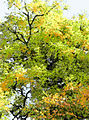 Tree Abstract 2.jpg