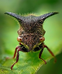 Tree Hopper 47867.jpg
