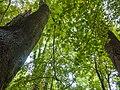 Tree canopy (10493548644).jpg