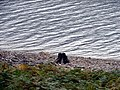 Tree stump beside Loch Ericht - geograph.org.uk - 263917.jpg