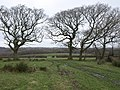 Trees near Langdon - geograph.org.uk - 682181.jpg