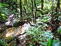 Trilha do braço do rio taquaral - São Miguel Arcanjo.jpg