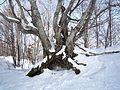 Troyan, Bulgaria - panoramio (23).jpg