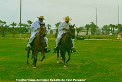 Chalanes trujillanos en caballos de paso