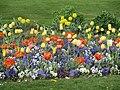Tulipes Pensées Tuileries.jpg