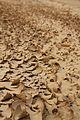 Tunisia 10-12 - 192 - Atlas Mountains & Mides Canyon (6610499163).jpg