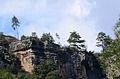 Turkish pine trees, Canyon Kapıkaya 02.jpg