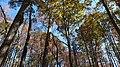 Twin Lakes Fall Hike (15701665946).jpg