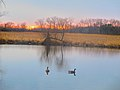 Two Canada Geese - panoramio.jpg