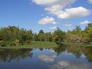 Washington Park Arboretum - Wetlands in the park by Foster Island