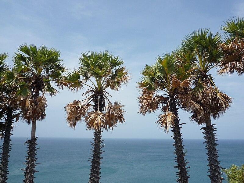Unbek palme 011