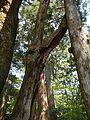 Untitled - panoramio - kiwa dokokano (21).jpg