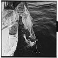 Vårfiske på Vardø - L0049 770Fo30141609280027.jpg