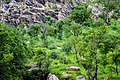 Végétation saxicole à l'entré de Tanguiéta.jpg