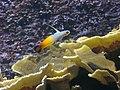 Vannes - aquarium (09).jpg