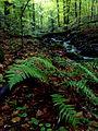 Vegetácia v Badínskom pralese.JPG