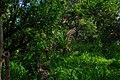 Vegetation Kwara state.jpg