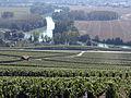 Vigne Pinot noir (Vue sur la Marne) Cl.J.Weber02 (23382024540).jpg