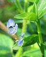 Violet Flower Small2.jpg