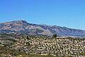 Vista cap a la serra de Mariola i Cocentaina des de Benilloba.JPG
