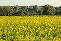 Vlaamse Ardennen 08.jpg