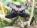 Vlinders aan de Vliet 17.jpg