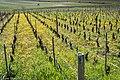 Volnay Burgundy (157453975).jpeg