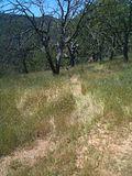 Volunteer Trail at Pacheco Ridge Rd - panoramio.jpg