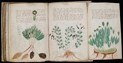 One of the foldout pages in the Voynich manuscriptWikipedia Book