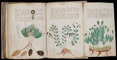 Copy of The Voynich Manuscript Voynich Manuscript 170 Jpg