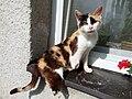 Vrbno - handicapovaná kočka.jpg