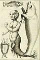 Vue philosophique de la gradation naturelle des formes de l'etre, ou Les essais de la nature qui apprend a faire l'homme (1768) (14581302558).jpg