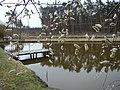 WILCZE ŁUGI wiosna 03 - panoramio.jpg