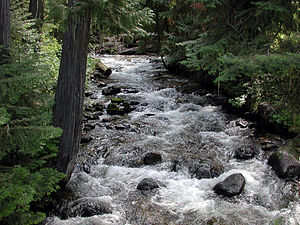 Tributary - Walton Creek, a small tributary of the Lochsa River in northeastern Idaho, flowing slightly upstream of its confluence with a larger stream.