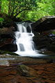 Waterfall-in-the-forest - West Virginia - ForestWander.jpg