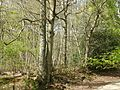 Wealden countryside 3199.JPG