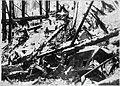 Wellington Avalanche Debris.jpg