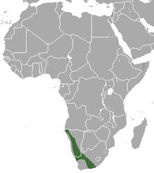 Western Rock Elephant Shrew area.png