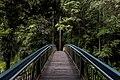 Whangarei Falls, Whangarei, New Zealand (Unsplash eOpewngf68w).jpg