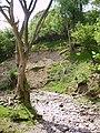 Whinhowe Gill - geograph.org.uk - 183518.jpg