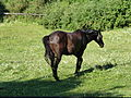 Whistlewood Farm, Rhinebeck, New York P1150912.JPG