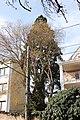 Wiener Naturdenkmal 13 - Mammutbaum (Döbling) c.JPG
