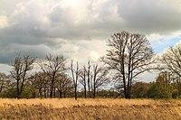 Wijnjeterper Schar, Natura 2000-gebied provincie Friesland 06.jpg
