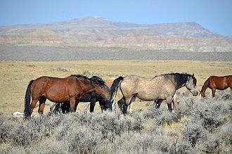 Free-roaming horse management in North America - Mustangs in Wyoming