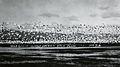 Wild geese, circa 1934 (6478688733).jpg